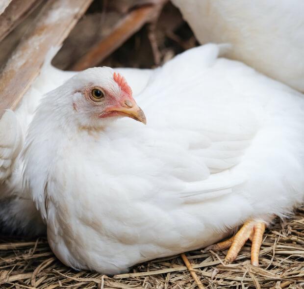 Apel do hodowców o wzmożoną ostrożność w związku z pierwszymi przypadkami grypy ptaków w Europie