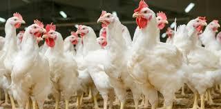 15,16 i 17 ognisko grypy ptaków w II półroczu 2020