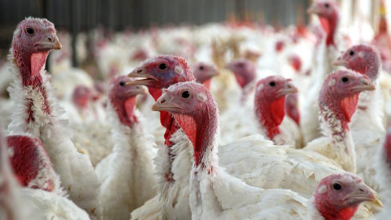 Drugie ognisko wysoce zjadliwej grypy ptaków w drugim półroczu 2020 r. potwierdzone