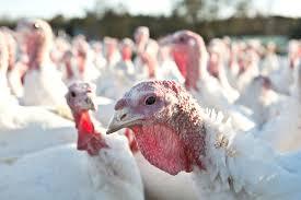 18 i 19 ognisko grypy ptaków w 2021 roku